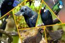 Estas son las nueve aves en peligro de extinción en Santander