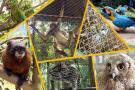 Regresaron a la libertad 11 animales silvestres tras abusos en Santander