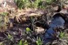 ONU verificará restauración ecológica por fuga de crudo en pozo de Santander