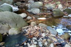 La ciudadanía espera que las autoridades envíen trabajadores para limpiar la fuente hídrica.