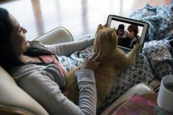 Algunas mascotas acompañan a sus dueños a la hora de ver una serie en maratón.