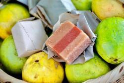 Los turistas podrán conocer el proceso de cultivo, cosecha y almacenamiento de las dos variedades de guayaba que se utilizan para la producción del bocadillo veleño.