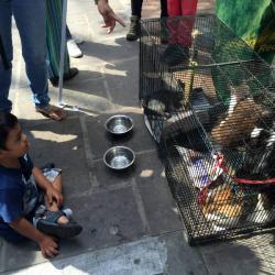 Bumangueses le dijeron sí a la adopción de mascotas abandonadas