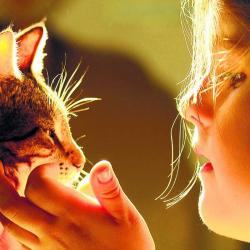 ¿Adoptar un gato con sida o leucemia? Sí se puede