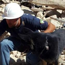 Un pastor alemán llamado Sarotti ayudó a rescatar a una niña de 11 años.