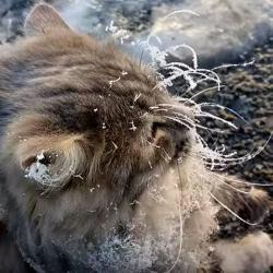 Rescate de gato que quedó congelado y pegado al piso