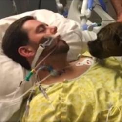 Conmovedora despedida de una perra a su amo en estado de coma