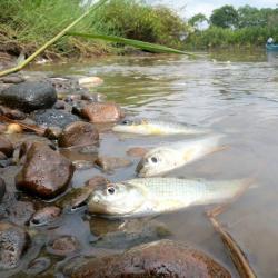 Graves imágenes de la contaminación ambiental por crudo en Santander
