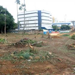 Así quedó la Escuela Normal de Bucaramanga tras la tala de árboles
