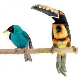 El Instituto Humboldt compartió estas fotografías en el Día Mundial de la Diversidad Biológica.