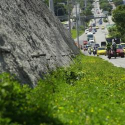 Las obras viales han cobrado cientos de árboles y espacios verdes en pro del progreso en la ciudad. En la construcción del 'Tercer Carril' se recuperó parte del espacio verde sobre la autopista.