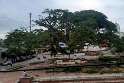 Fuerte vendaval afectó viviendas y árbol insignia de Landázuri, Santander