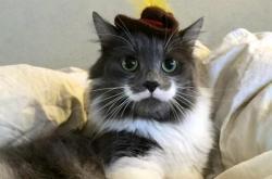 Conozca a Hamilton, el gato 'Hipster' que triunfa en las redes