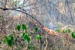Incendios forestales siguen azotando a Bucaramanga