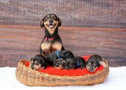 ¿Recuerdan la sesión de fotos del embarazo de Lilica? Ahora posó con sus cachorritos