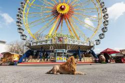 Conozca a Tschikko, un perro con alma de león