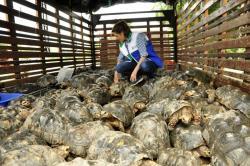 Liberan 176 tortugas en una ciénaga de Santander