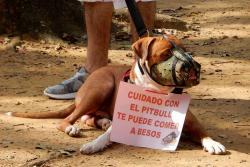 Rechazan en Bucaramanga estigmatización hacia perros de razas potencialmente peligrosas