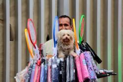 Conozca los 'criollos' de Bucaramanga en el día del perro sin raza