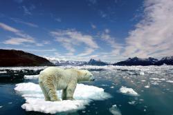 Video muestra la desaparición del hielo ártico en los últimos 25 años