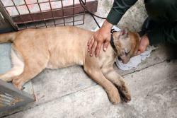 Recuperan un puma cachorro en Barrancabermeja