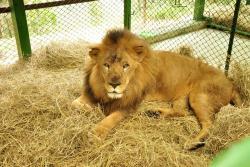 Así fue el maratónico operativo de salida de los leones de Bucaramanga