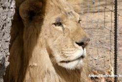 Así fue el 'final feliz' de los leones de Bucaramanga