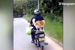 ¿Qué opina de la actitud de estos motociclistas con sus mascotas en Bucaramanga?