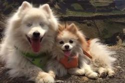 Conozca a Zen, el cachorro que guía a un perro ciego