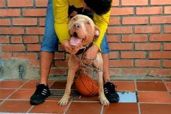 La 'milagrosa' recuperación de perro víctima de maltrato en Bucaramanga