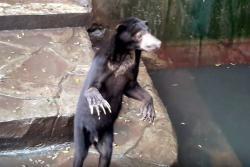 """""""Delgado no significa enfermo"""": respuesta de zoológico sobre estado de sus osos"""