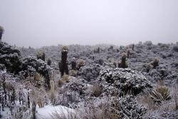 Video de sorprendente nevada, después de 10 años, en parque Los Nevados