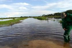 Crecientes inundaron mil hectáreas de arroz en Puerto Wilches