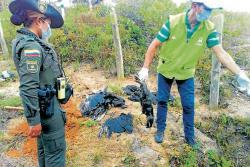 Denuncian muerte masiva de gallinazos en Piedecuesta