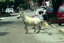 Poni 'fuera de control' puso en aprietos a un barrio de Bucaramanga