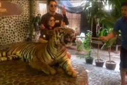 Maltratan un tigre para que turistas se tomen fotos en zoológico de Tailandia