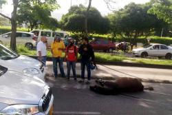 Muere caballo en la autopista a Bucaramanga luego de ser arrollado por dos carros