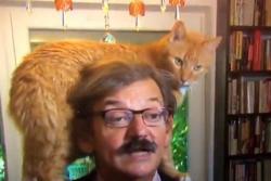 Gato causa furor en las redes tras interrumpir una entrevista en vivo