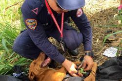 Así fue el rescate de Chávez, un perro criollo perdido en Bucaramanga
