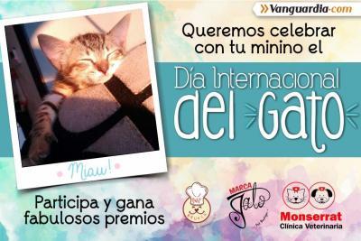 El 20 de febrero se celebra el día mundial del gato.