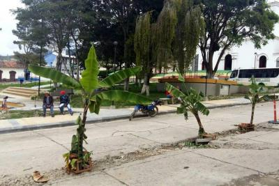 Siembran café, aguacate y plátano ante daños en vía principal de pueblo de Santander