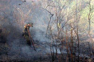 Grave incendio forestal consumió 40 hectáreas de bosque nativo en Piedecuesta