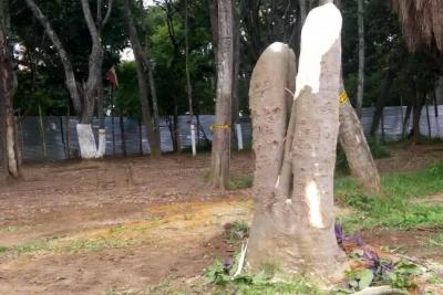 Continúa tala de árboles dentro de la Escuela Normal en Bucaramanga