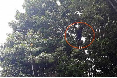 Hombre se subió a un árbol en la Escuela Normal para evitar que sea talado