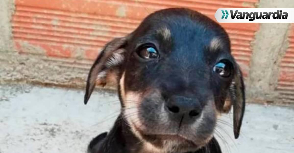 """En esta fundación de Bucaramanga hay 'peluditos' a la espera de su """"mejor amigo"""" - Vanguardia"""
