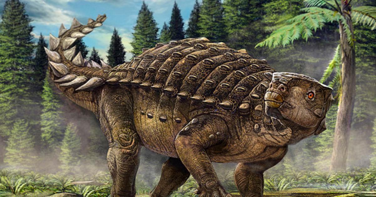 Una Historia De Dinosaurios Vanguardia Com 11:31 representante cimi 180 510 просмотров. vanguardia