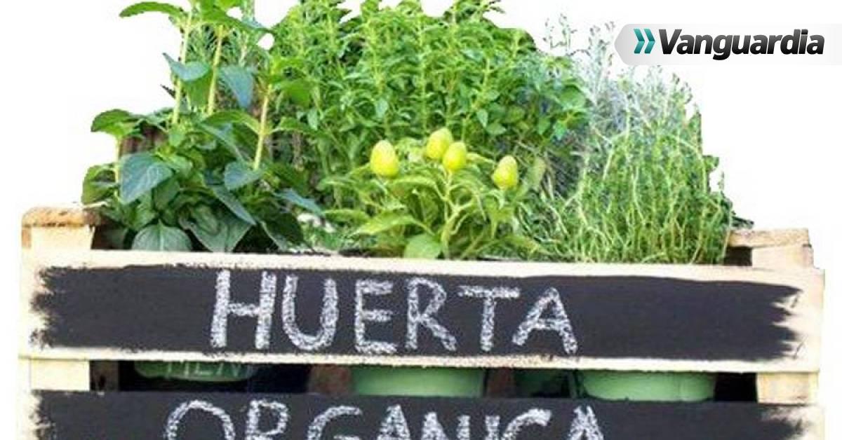 jardin vertical casero como hacer un jard n paso a siembra en casa Huertas caseras, vivir entre la naturaleza | Vanguardia.com