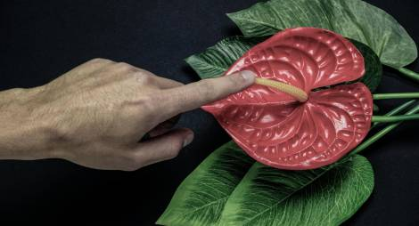 blurred male hand touches a red tropical flower on a black background, sex concept