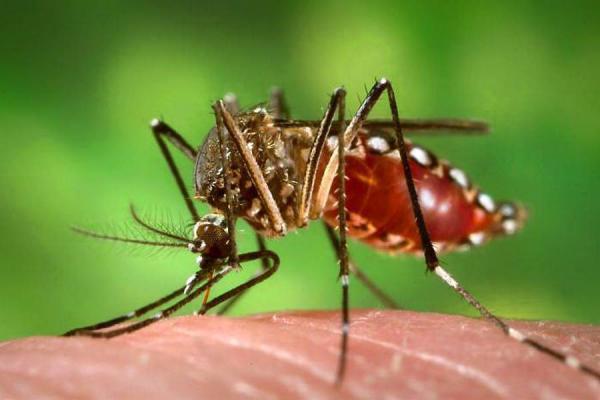 Puedo tener relaciones sexuales si tengo dengue
