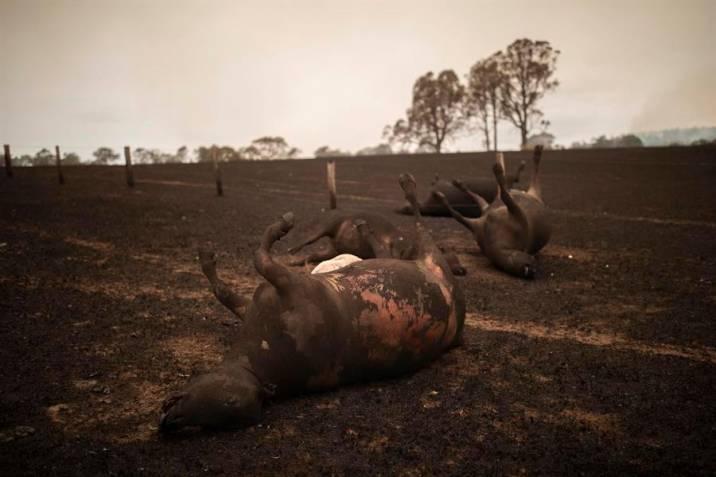 Katastrofalni požar u Australiji - Page 3 Cf40e353d6533a45cd958675b4b098881eb4666ew_3971725_20200103123748